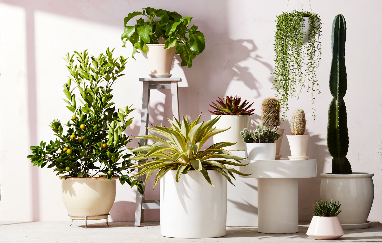 MSL_houseplants
